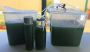 workshops:prototypes:build_a_spirulina_farm:spirulina-set-up.png